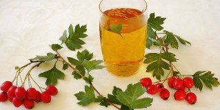herbs to increase potency in men hawthorn